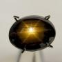 AHMG1513 - Black Golden Star Sapphire