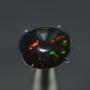 FBO2 - Black Opal
