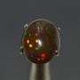 FBO4 - Black Opal