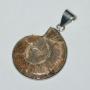 RR1508 - Brown Ammonite