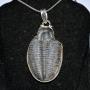 XG6035 - Trilobite Fossil